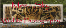Mesa Sky Wildlife Photography