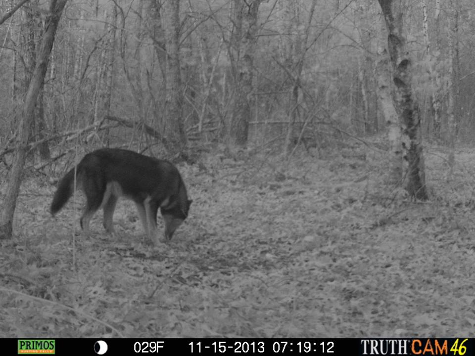 dave-bitters-trailcam-4