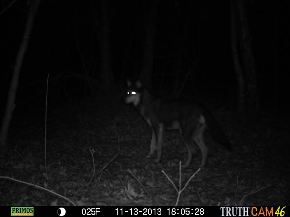 dave-bitters-trailcam-5